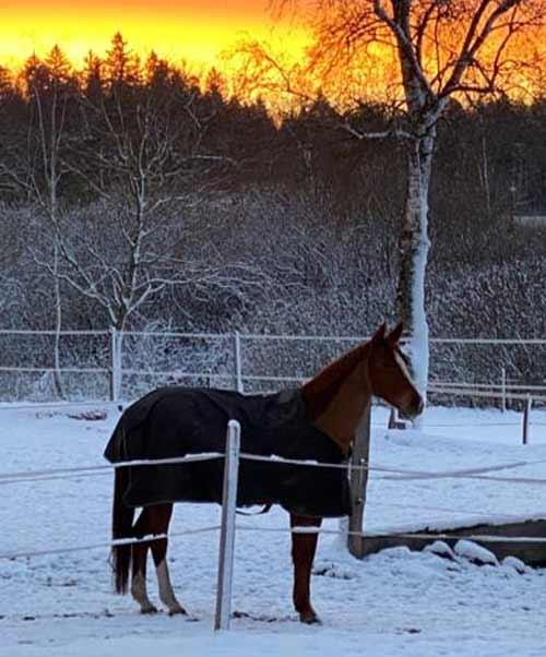 Kontakt Mensch&Pferd