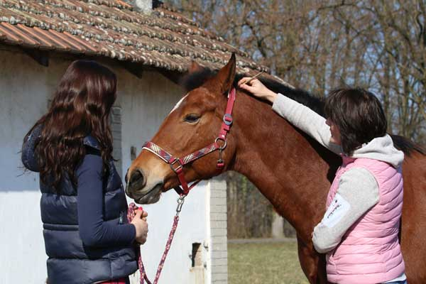 Therapie für Pferde